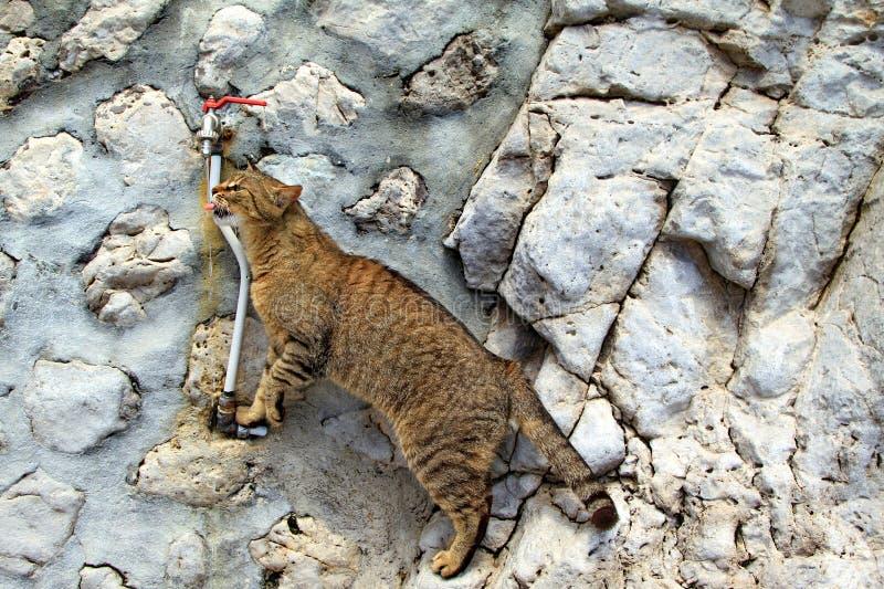 Agua potable del gato fotografía de archivo libre de regalías