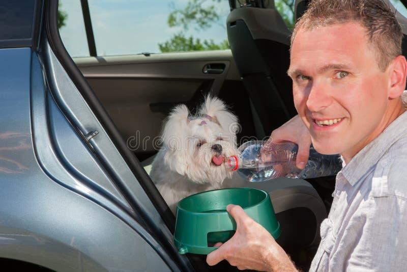 Agua potable del perro fotografía de archivo