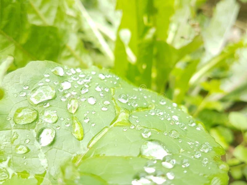 Agua que se fuga una hoja verde vibrante fresca, naturaleza pura limpia fotografía de archivo libre de regalías