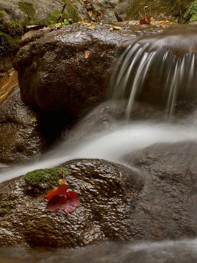 Agua y hoja roja 2 imagen de archivo libre de regalías