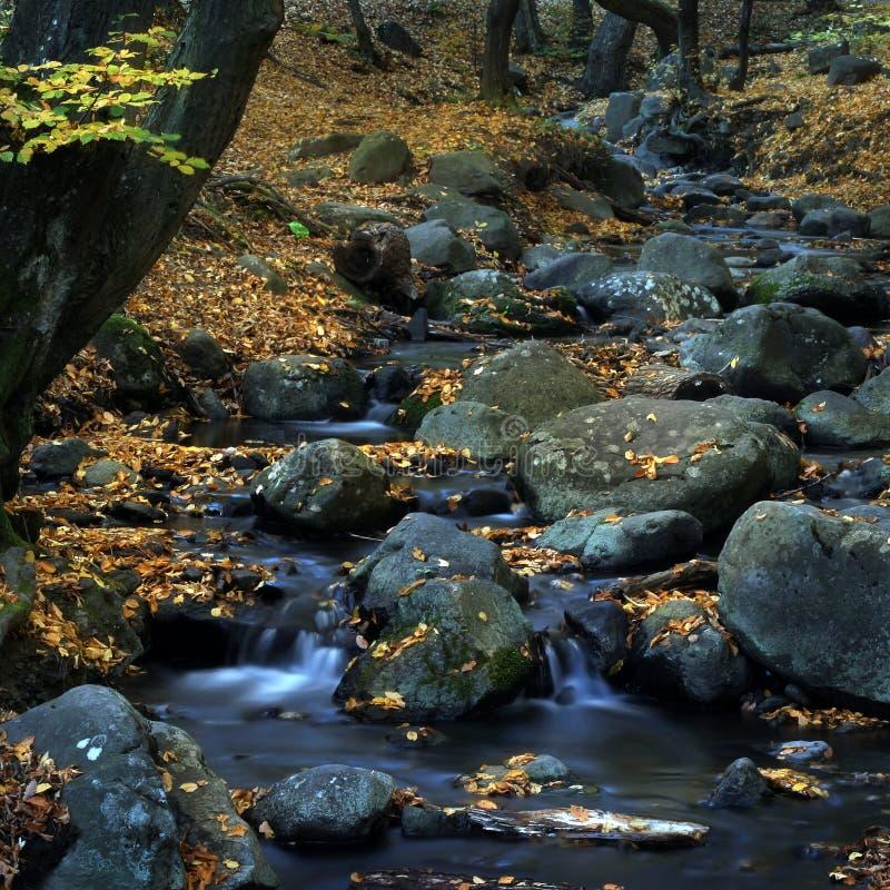 Agua y hojas 2. imagen de archivo libre de regalías