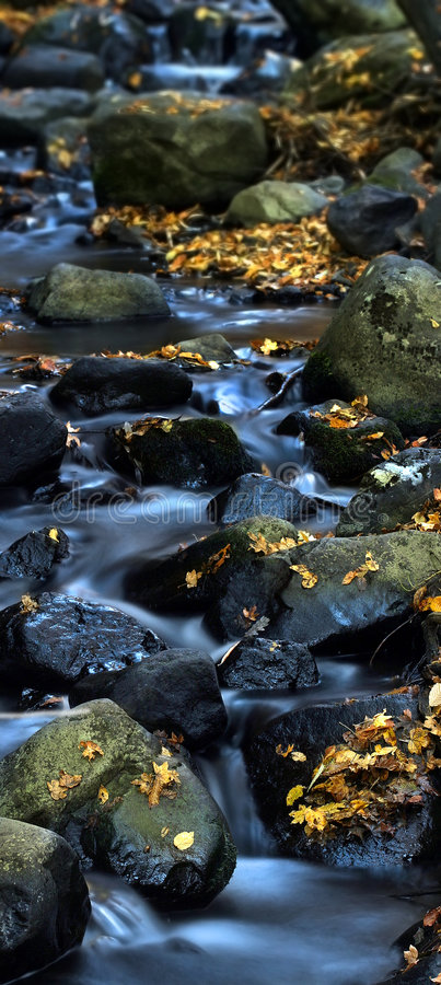 Agua y hojas 5. fotografía de archivo