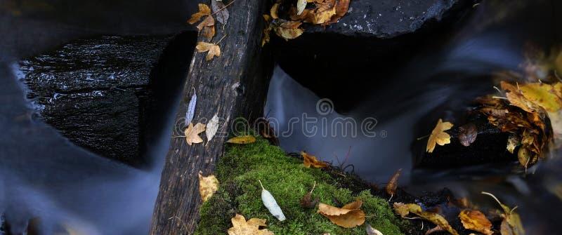 Agua y hojas 6 imagen de archivo