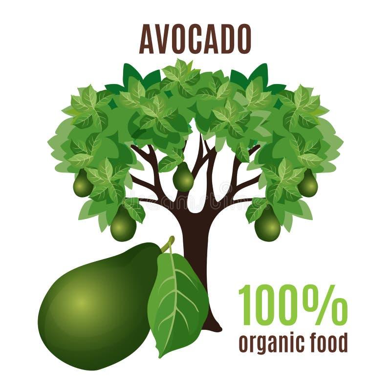 Aguacate aislado con la fruta abajo, el 100 por ciento de alimento biológico libre illustration