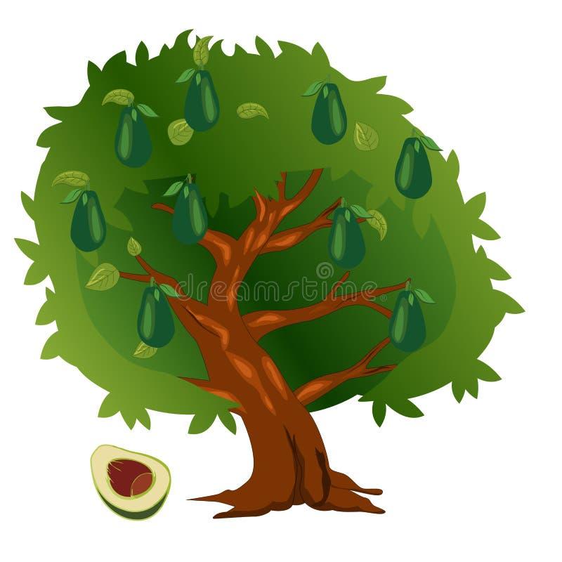 Aguacate con las frutas y las hojas del verde stock de ilustración