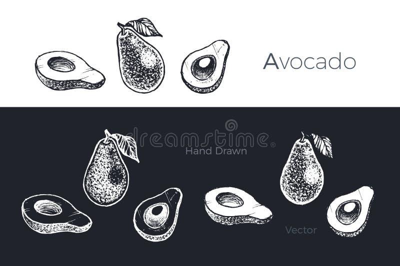 Aguacate dibujado mano Sistema del vector del bosquejo de las frutas libre illustration