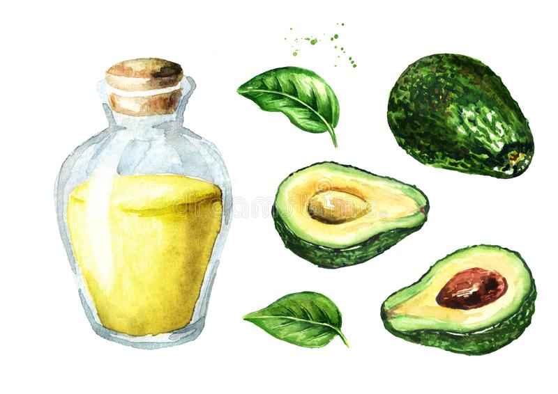 Aguacate maduro fresco con el sistema del aceite esencial del aguacate, ejemplo exhausto de la mano de la acuarela, aislado en el stock de ilustración