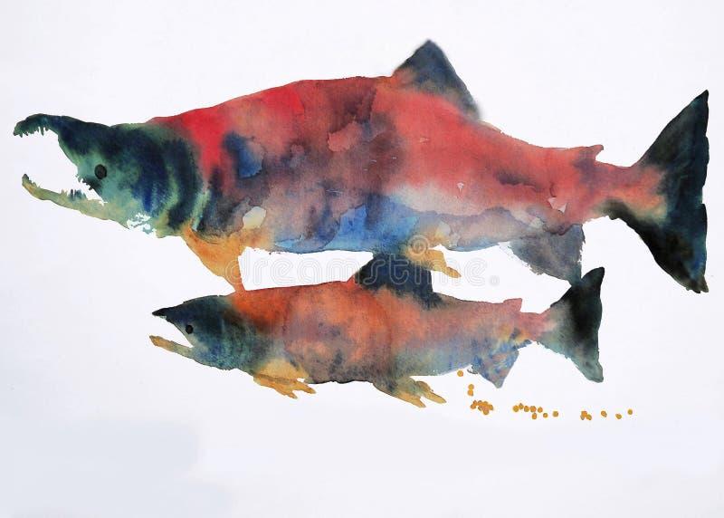 Aguarela dos salmões de Sokeye ilustração stock