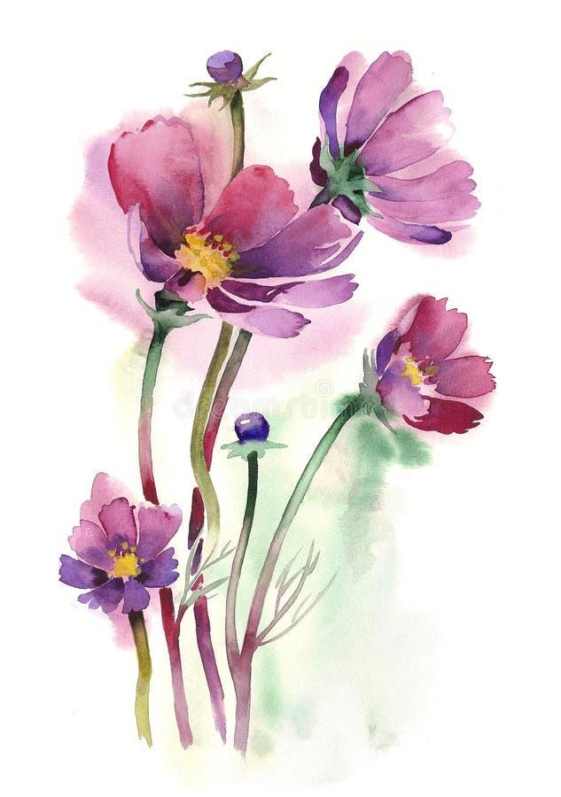 Aguarela - flores do cosmos ilustração royalty free