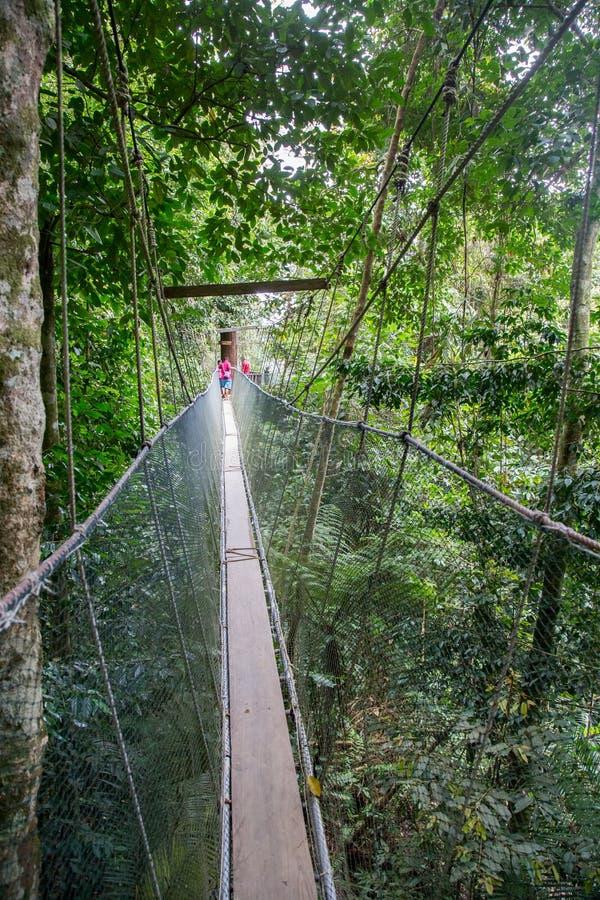 Aguas termales Poring, Sabah, Borneo Malasia imágenes de archivo libres de regalías