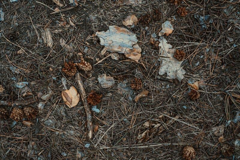 aguja del Abeto-cono y fondo de las hojas derrochado Primer fotos de archivo
