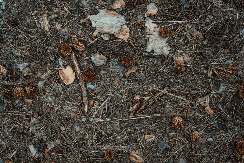 aguja del Abeto-cono y fondo de las hojas derrochado Primer imagen de archivo libre de regalías