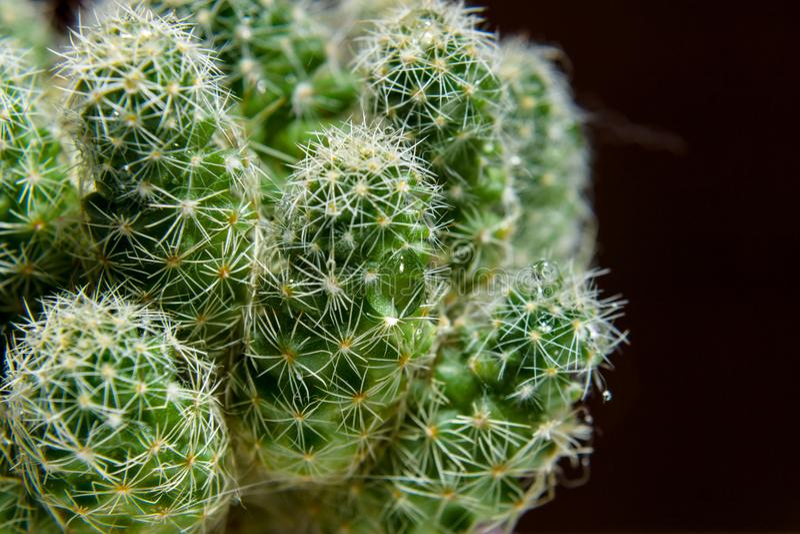 Agujas del cactus Primer imágenes de archivo libres de regalías