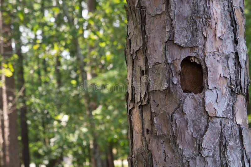 Agujero de la pulsación de corriente en un árbol fotografía de archivo