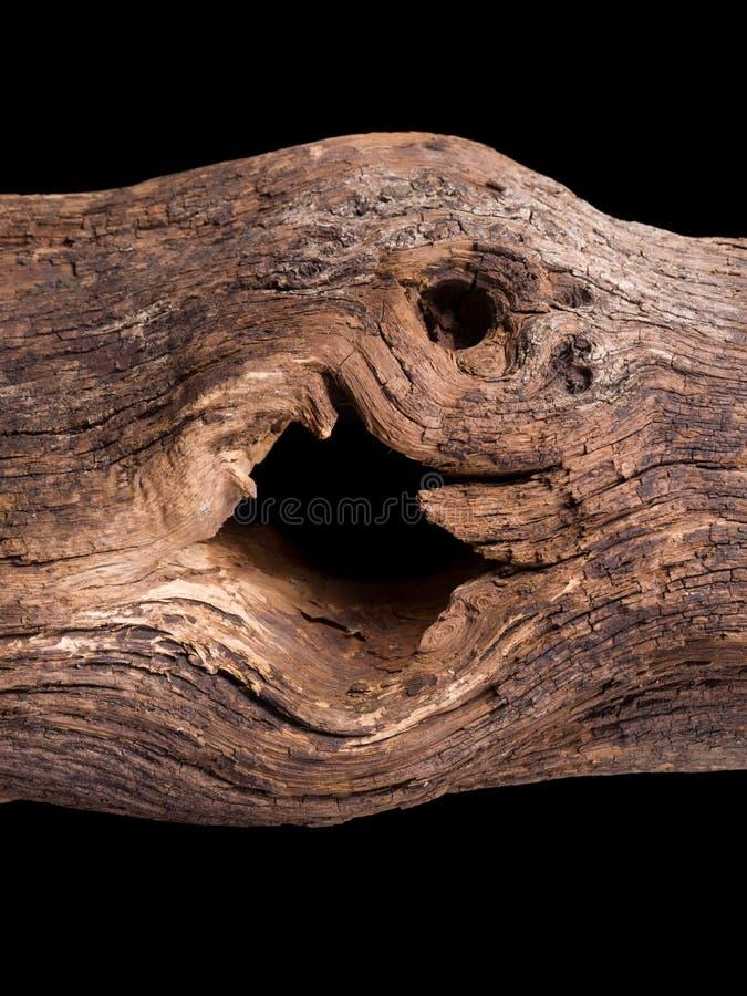 Agujero oscuro en el registro de la madera foto de archivo
