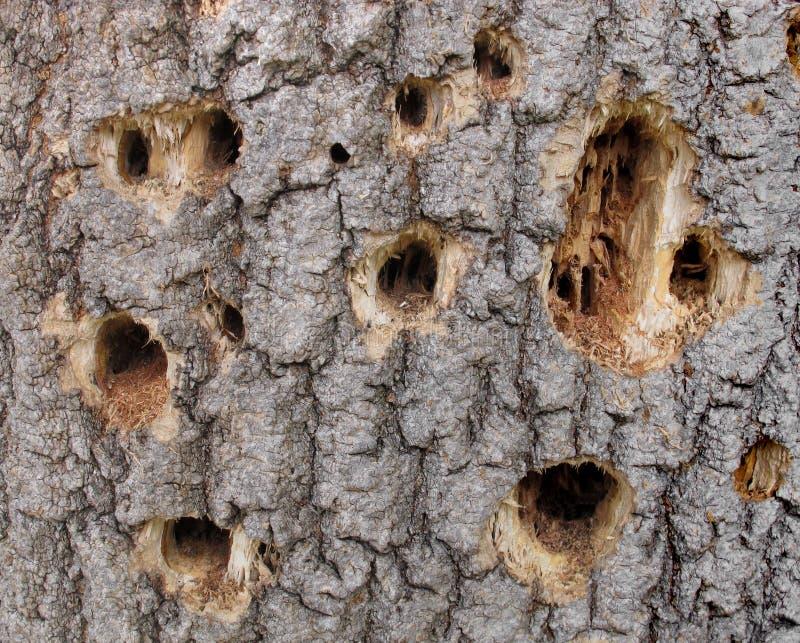 Agujeros de la pulsación de corriente en un árbol. imagenes de archivo