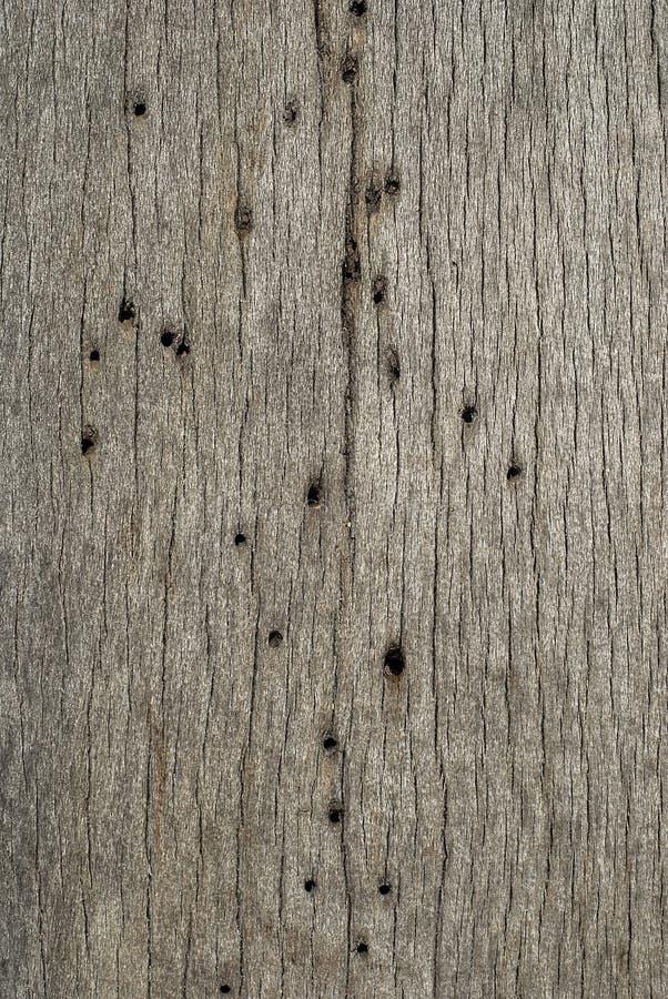 Agujeros del woodworm de la tarjeta de madera imagen de archivo
