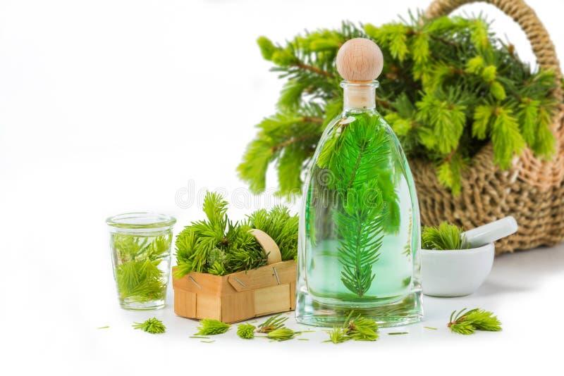 Agulha Spruce má, plantas medicinais imagem de stock royalty free