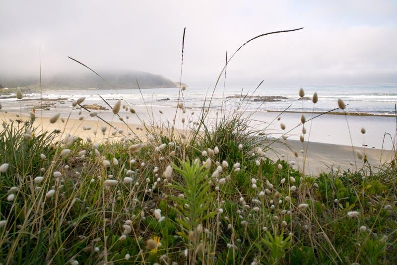 Ahipara strand royaltyfria foton