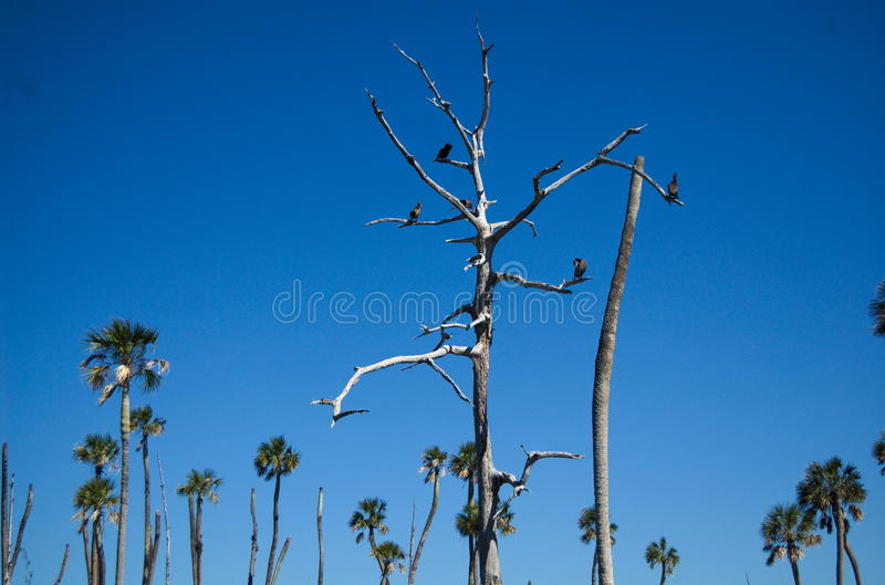 Ahninga Tree stock images