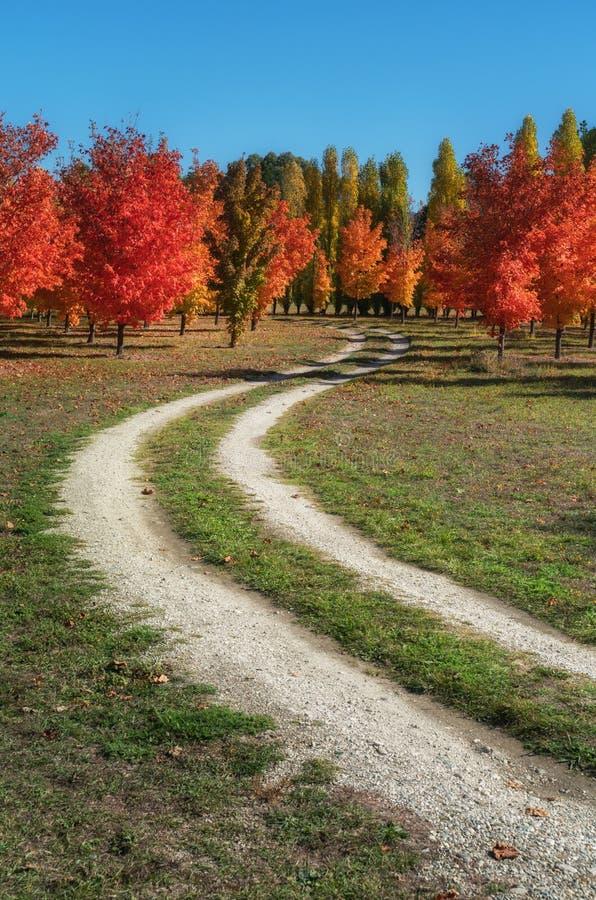Ahornbäume eines reizende Herbstes auf einem Schotterweg in Roxburgh, Neuseeland lizenzfreie stockfotos