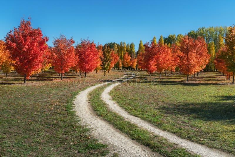 Ahornbäume eines reizende Herbstes auf einem Schotterweg in Roxburgh, Neuseeland lizenzfreie stockbilder
