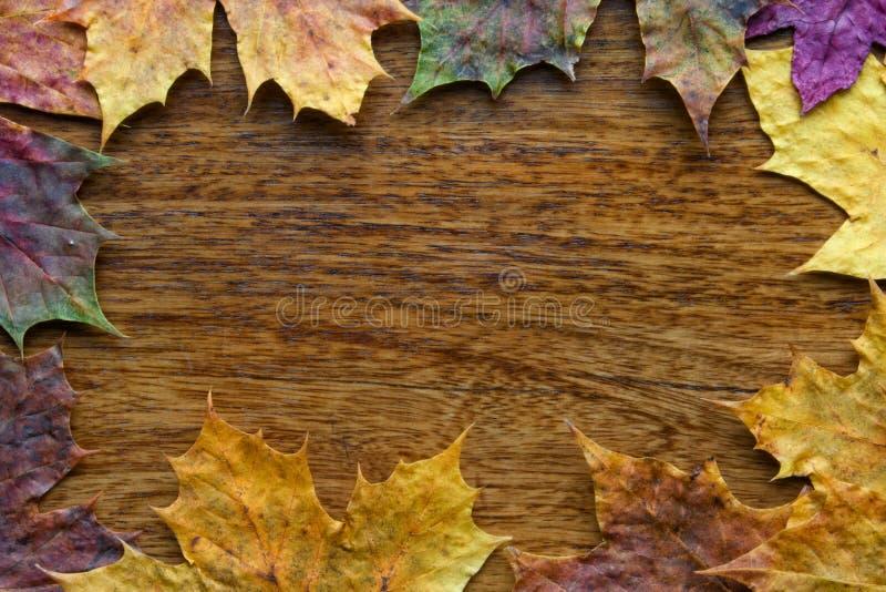 Ahornblätter auf dem hölzernen Hintergrund stockfotografie