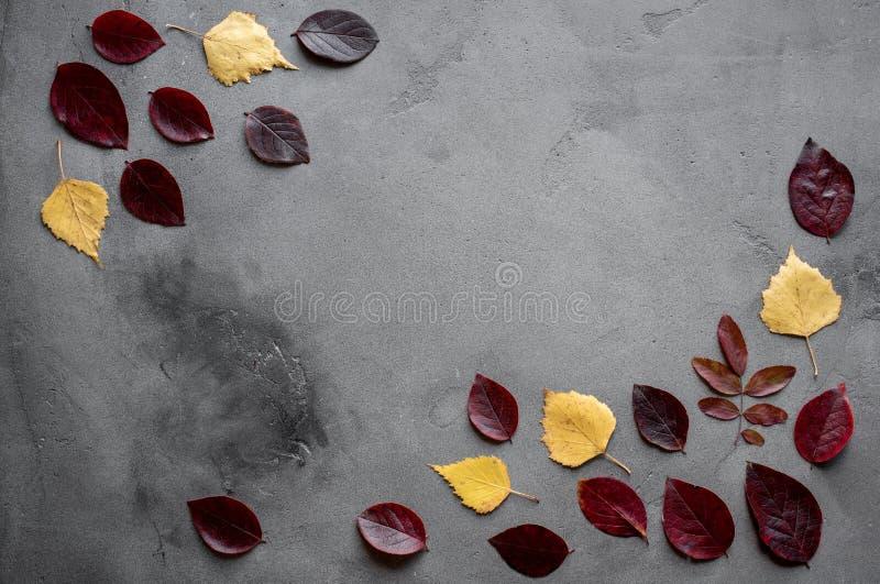 Ahornblätter auf Hintergrund stockfotos