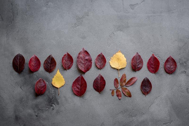 Ahornblätter auf Hintergrund stockfoto