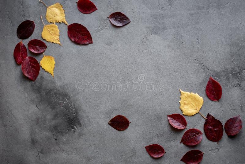 Ahornblätter auf Hintergrund lizenzfreie stockfotografie
