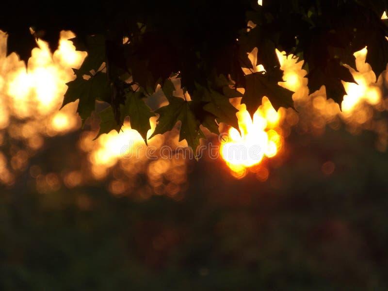 Ahornblätter gegen einen unscharfen Sonnenunterganghintergrund lizenzfreie stockbilder