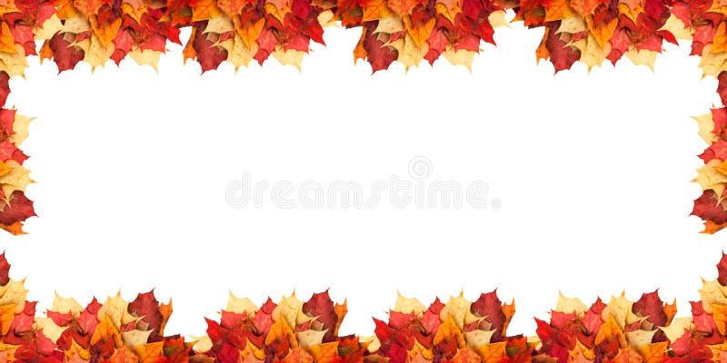 Ahornblätter neben einander gelegen auf einem weißen Hintergrund stockfotos