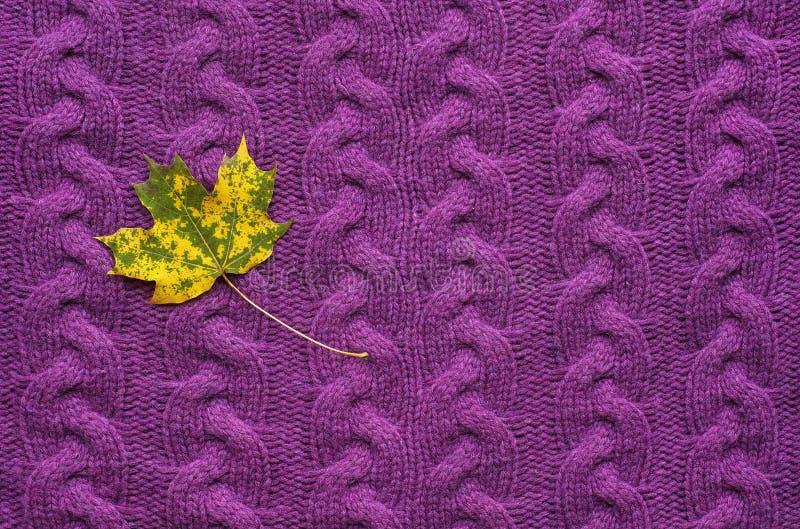 Ahornblatt auf einem purpurroten Strickpulli Bunter Herbstlaub auf apurple gestrickter Strickjacke lizenzfreie stockfotos