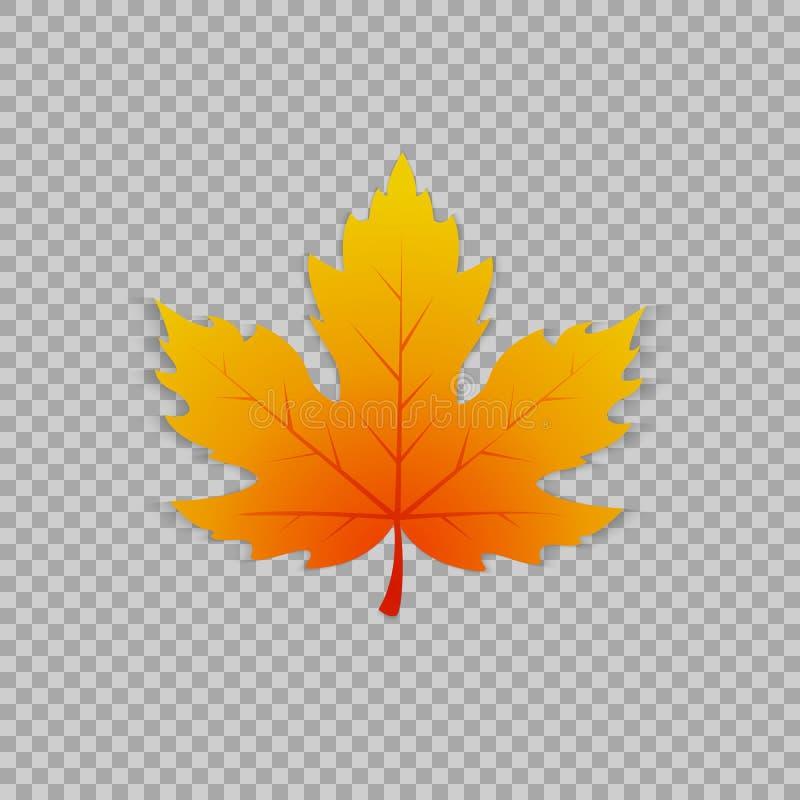 Ahornblatt in einer realistischen Art auf transparentem Hintergrund, Gegenstand Vektorillustration, botanisches Element vektor abbildung