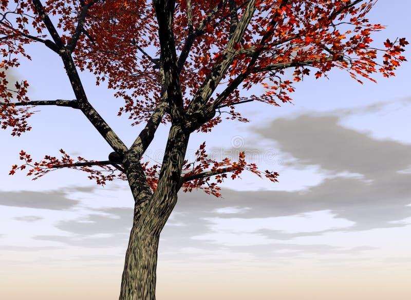 Ahornholz-Baum 2 stockfotos