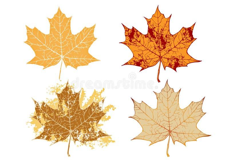 Ahornholz grunge Blätter stock abbildung