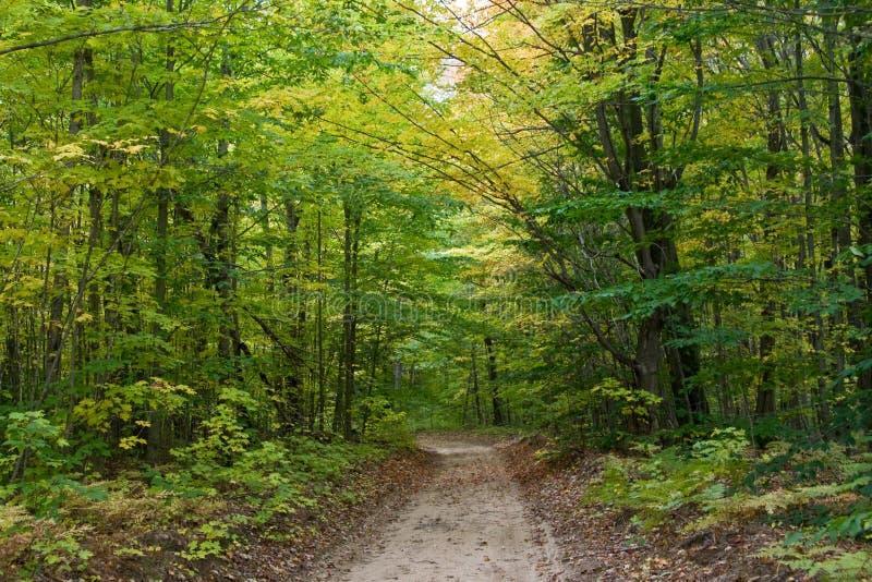 Ahornholz-und Buche-Bäume im frühen Herbst stockfoto