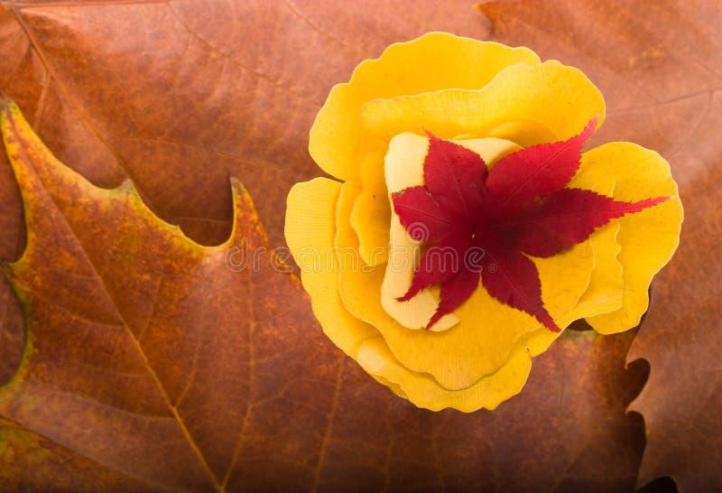 Ahornholz und Gingko biloba Blatt-Herbsthintergrund lizenzfreie stockbilder