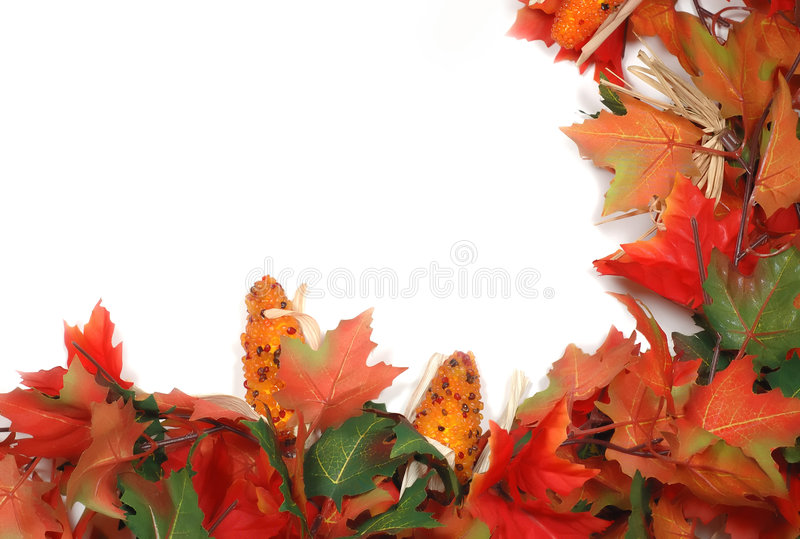 Ahornholzblätter und Mais - rechte niedrige conner Rand Danksagung stockbilder