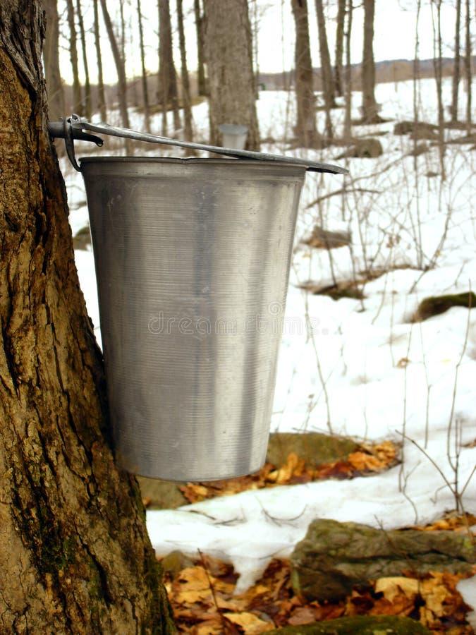 Ahornholzsirup stockfoto