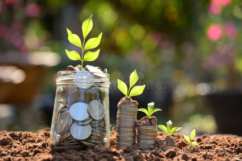 Ahorre el dinero con la moneda de la pila para crecer su negocio y plante u imágenes de archivo libres de regalías