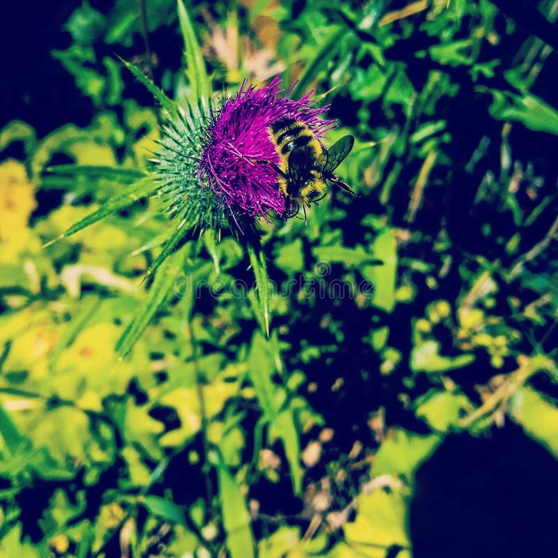 Ahorre las abejas fotografía de archivo libre de regalías