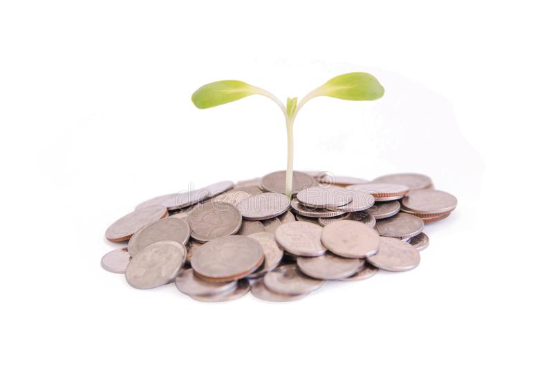 Ahorros del concepto, brote creciente verde en la pila del dinero aislada encendido imagenes de archivo