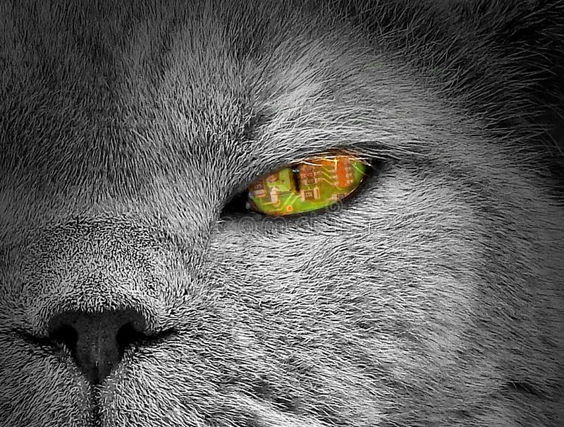 Ai artificial intelligence animals cat eye surveillance camera spy spying drone machine royalty free stock images