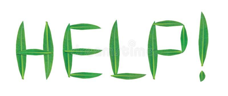 Aide des textes ! du vert, feuilles étroites d'un arbre d'oléandre photos stock