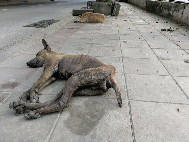 Aide en difficulté du besoin de chien vivante sur la rue photos stock