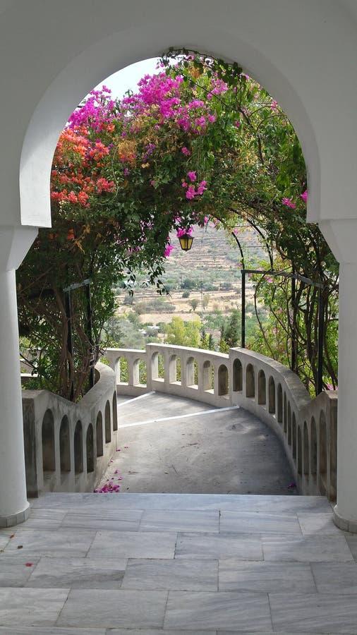 Aigina royaltyfria bilder