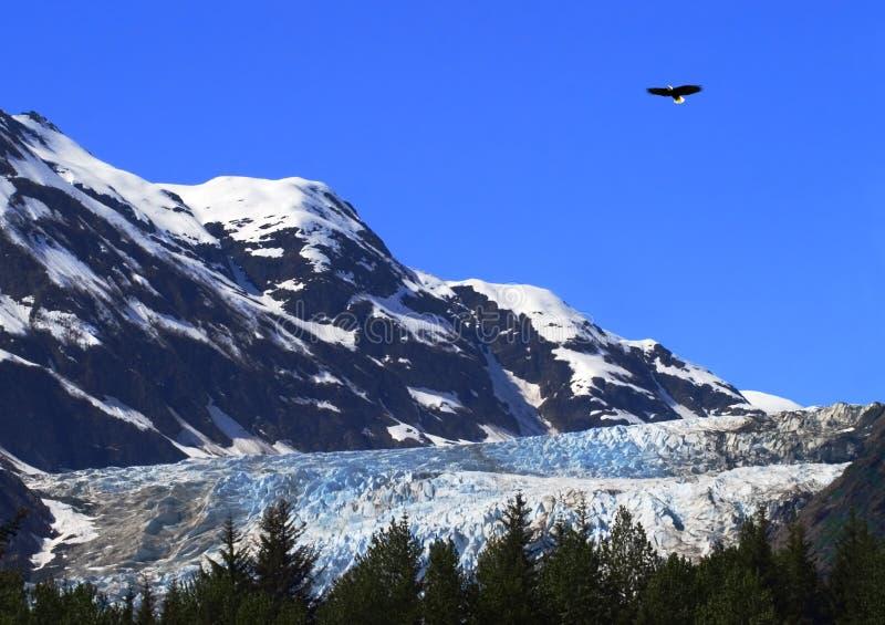Aigle au-dessus de glacier de Davidson