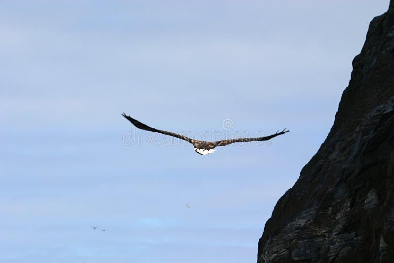 aigle Blanc-suivi près des roches images stock