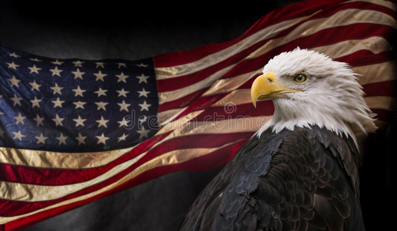 Aigle chauve américain avec l'indicateur photo libre de droits